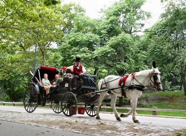 central park horse drawn carriage vistadome views. Black Bedroom Furniture Sets. Home Design Ideas
